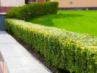 Dit heb je nodig voor het onderhouden van je tuin!