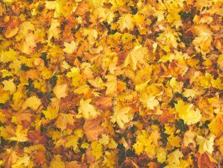Bladeren harken