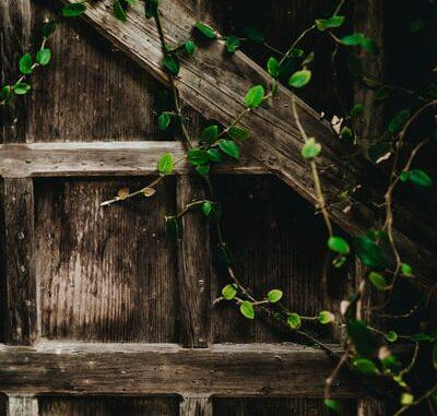 Schaduwplant
